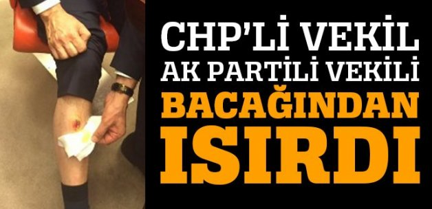 CHP'li vekil AK Partili vekili bacağından ısırdı