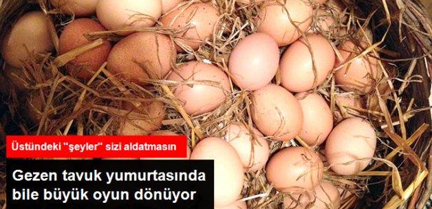 Gezen Tavuk Yumurtasında Büyük Aldatmaca Var
