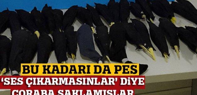 Papağanları bez kılıflar ve çorapların içine saklamışlar!