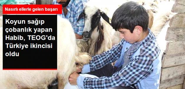 Koyun Sağıp Çobanlık Yapan Habib, TEOG'da 2. Oldu