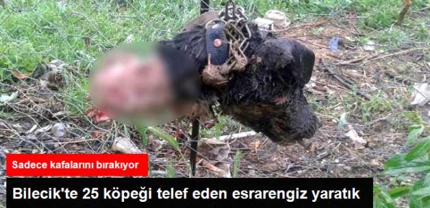 Bilecik'te 25 Köpek Esrarengiz Bir Hayvan Tarafından Telef Edildi