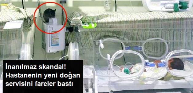 Tam Bir Skandal! Şanlıurfa'da Özel Bir Hastanenin Yeni Doğan Servisine Fare Girdi