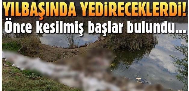 Adana'da yüzlerce at ve eşek kafası ile kemikleri bulundu