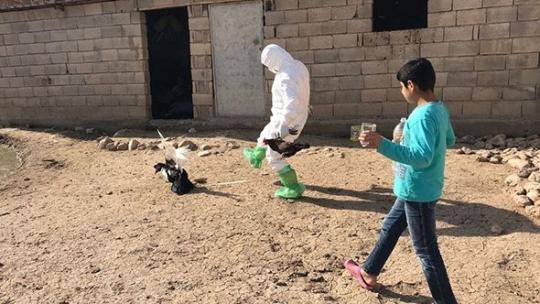 Korkutan gelişme! Kuş gribi tespit edildi, ekipler tek tek topladı