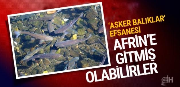 Çankırı'da asker balık efsanesi Afrin'e gitmiş olabilirler