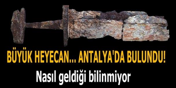 Antalya'da bulundu! Nasıl geldiği bilinmiyor...