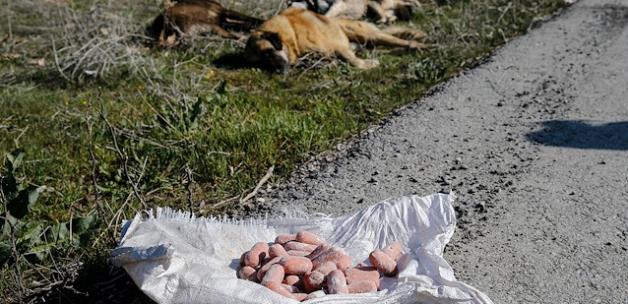 Ankara'da zehirli sosisle köpek katliamı
