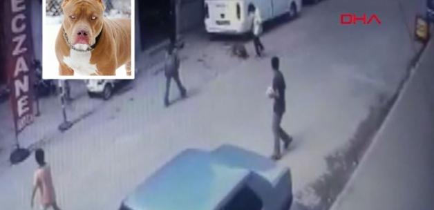 Adana'daki dehşet olay sonrası 'PitbullYasaklansın' etiketi TT oldu