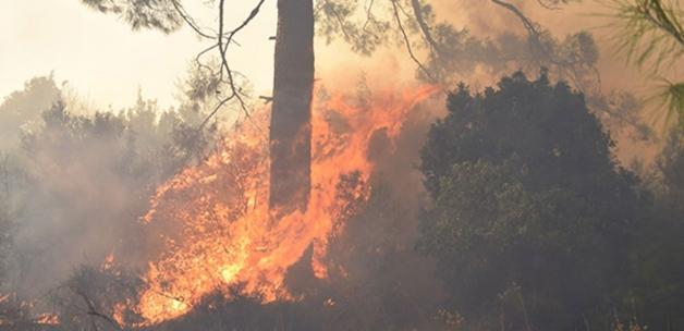 Orman yangınlarında ağaçların dibinde buldular! Patlamamış halde yakaladı