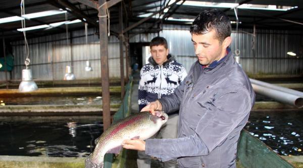 20 Milyon Balık Ölüm Tehlikesiyle Karşı Karşıya