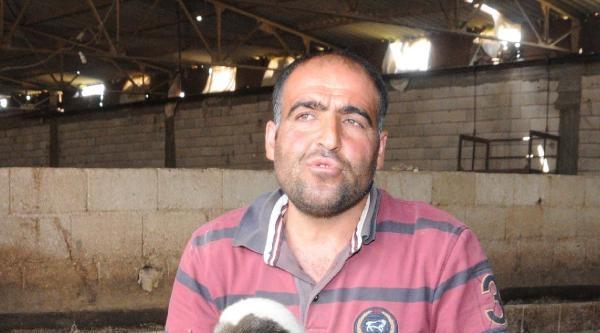 302 Koyun Ve Keçi Çalindi, Kuzular Sütsüz Kaldı