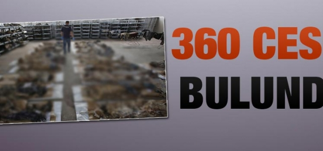 360 Ceset Bulundu!