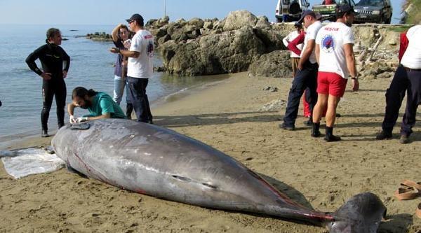 3 Ülkenin Askeri Tatbikatında Balinalar Ölüyor Tepkisi