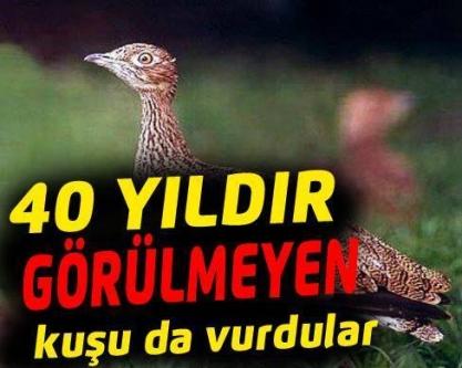 40 yıldır görülmeyen kuşuda vurdular!