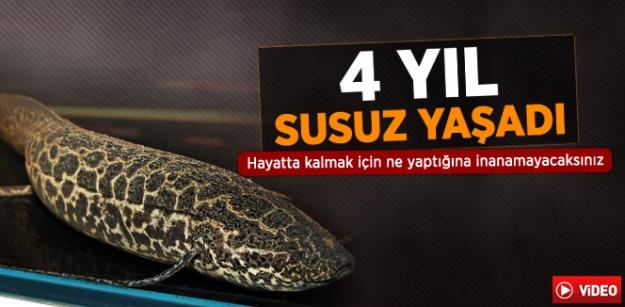 4 Yıl Susuz Yaşayabilen Balıkların Mücadelesi Anlatıldı...