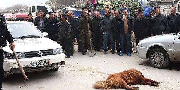 60 Kişi 1 Köpeği Böyle Katletti