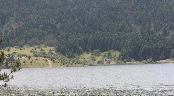 Abant Gölü'ne 50 Bin Balık Bırakıldı