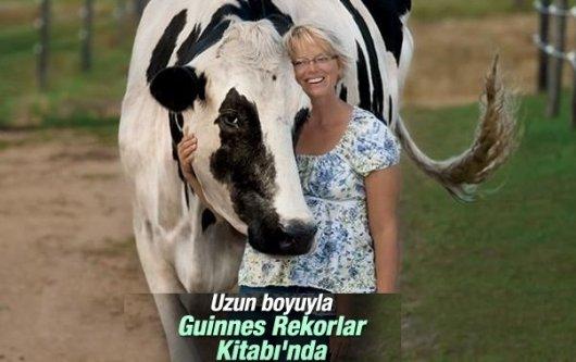 ABD'de bir inek Guinness Rekorlar Kitabı'na girdi