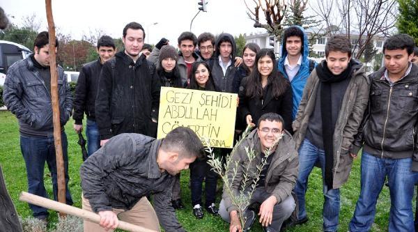 Abdullah Cömert'in Anısına Zeytin Fidanı