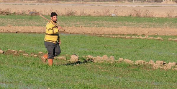 Adana'da Kuraklik Buğdayi Vurdu