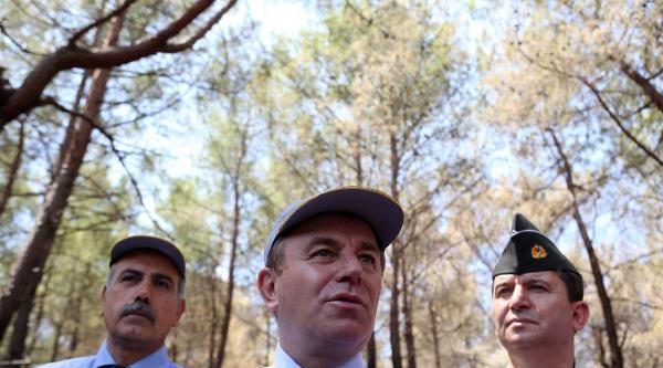 Adrasan'da Yanan Alanlar İmara Açılmayacak