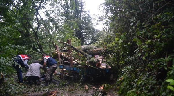Ağaç Traktörün Üzerine Devrildi: 6 Ölü, 15 Yaralı (fotoğraflar)