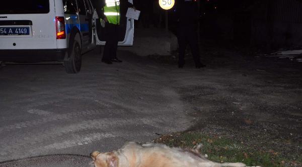 Ağaca Çarpip Ikiye Bölünen Otomobilde Sürücü Yaralandi, Eşi Öldü