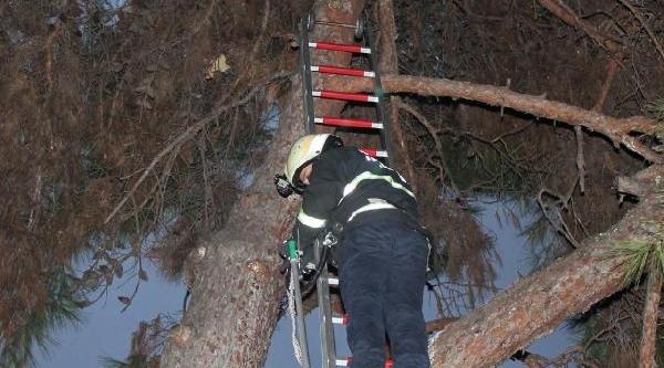 Ağaca Çikan Kedi 6 Gündür Indirilemedi