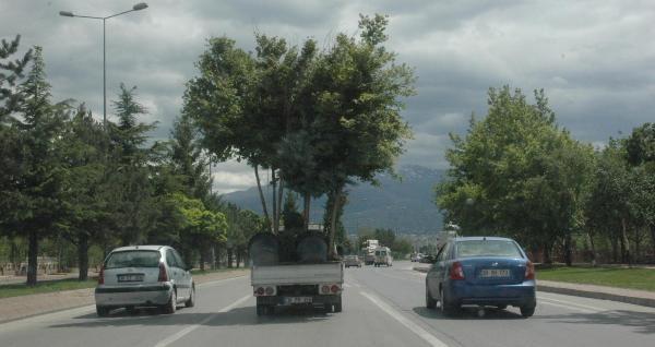 Ağaçları Böyle Taşıdılar