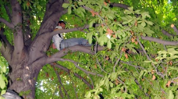Ağaçta Mahsur Kalan Genci İtfaiye Kurtardı