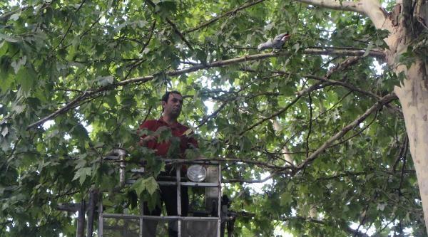 Ağaçta Mahsur Kalan 'şevket'i İtfaiye Kurtardı