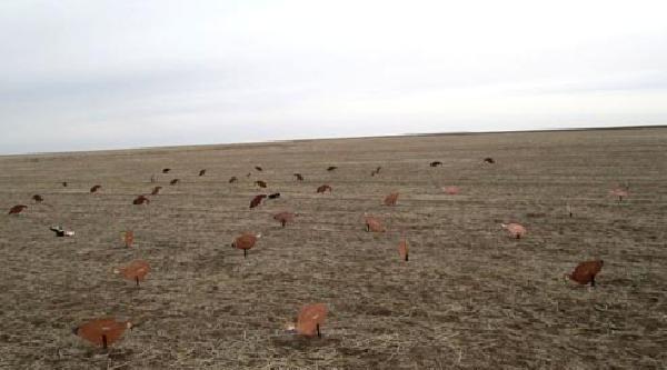 Ahşaptan Yapılmış Kuş Figürleriyle Avlanırken Yakalandılar