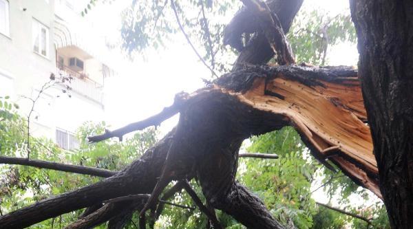 Akasya Ağacının Kırılan Dalı İki Araca Zarar Verdi