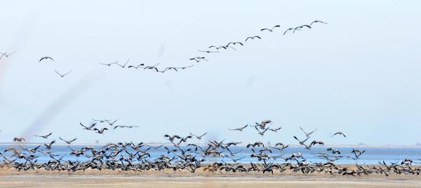 Akyatan Lagünü Göçmen Kuşlarla Doldu