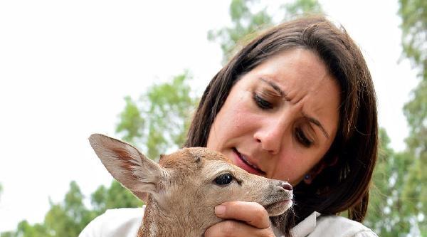 Alageyik 'bambi' Doğal Yaşam Parkında