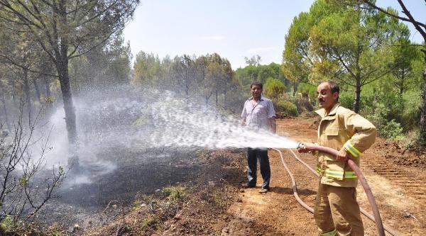 Alevler, 1.5 Hektar Çam Ormanını Küle Çevirdi