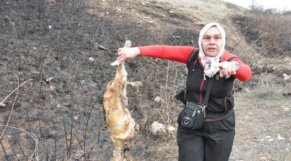 Amasya'da Köpek İtlafina Tepki