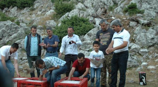 Andırın'da 750 Keklik Doğaya Bırakıldı