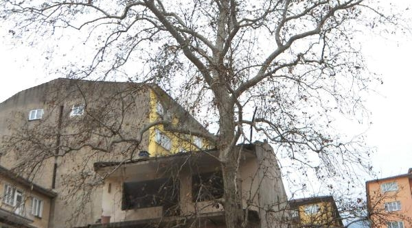 Anit Ağacin Arkasinda Yangin Tatbikati