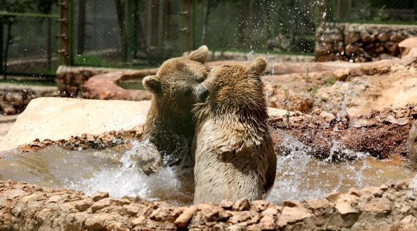 Antalya Hayvanat Bahçesinde Fıskiyeli Serinlik