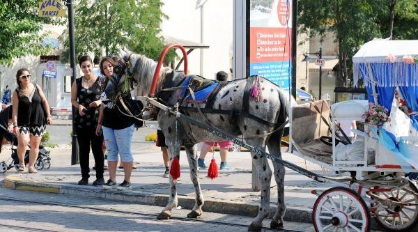Antalya'da Boyalı At Skandalı