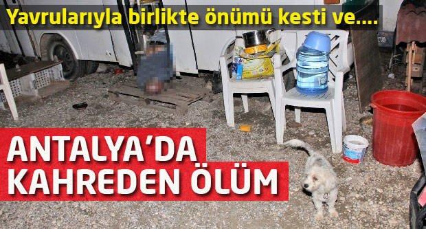 Antalya'da kahreden ölüm! Yavrularıyla birlikte önümü kesti ve...