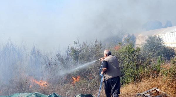 Antalya'da Ot Ve Çalilik Yangını