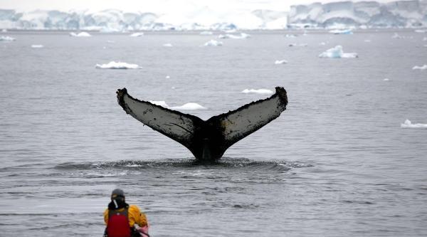 Antarktika Hayali Gerçek Oldu