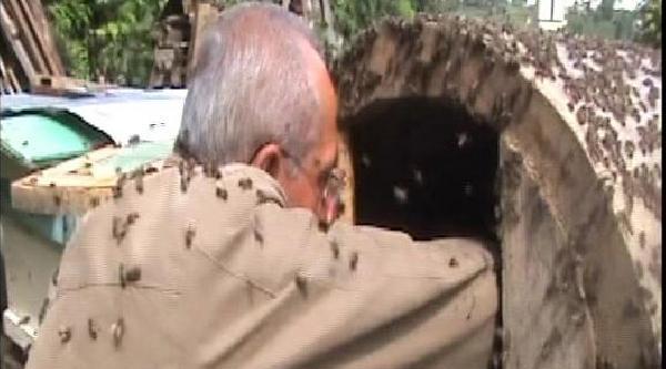Arı Dolu Kovana Elini Soktu, Bal Sağdı