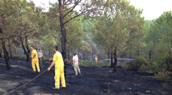 Armutlu'da Orman Yangını (2)