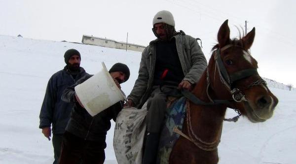 At Sirtinda Su Taşiyorlar