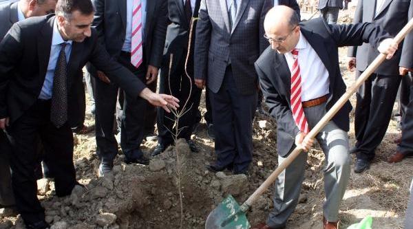 Atatürk Baraji Kiyisina 4 Bin 500 Fidan Dikildi