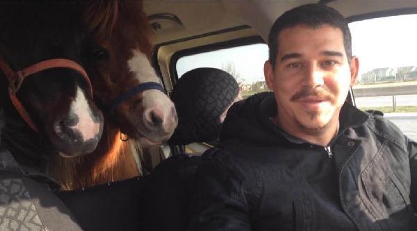 Atlarını Hafif Ticari Araçla Taşıdı