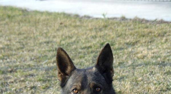 Avrupa Ödüllü Narkotik Köpek Uyuşturucuya Geçit Vermiyor